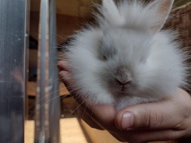 Mini coelhos fofinhos - Foto 6