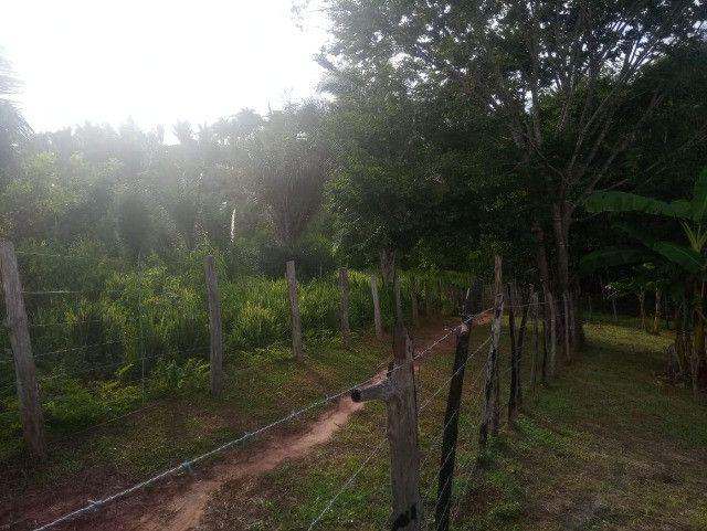 Vende-se sítio com casa, amplo espaço e inúmeras árvores frutíferas. - Foto 6