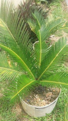 Plantas variadas a negociar