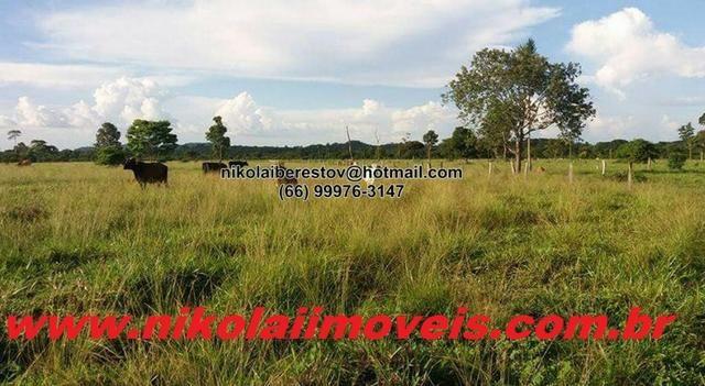 Fazenda 312 hectares nordeste mt nikolaiimoveis