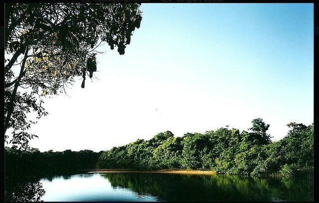 Vendo uma fazenda de 10.257 hectares, em Cocalinho- mt - Foto 3
