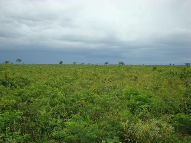 Fazenda com 1.006 hectares, com sede, aberta, para soja e milho - Foto 2