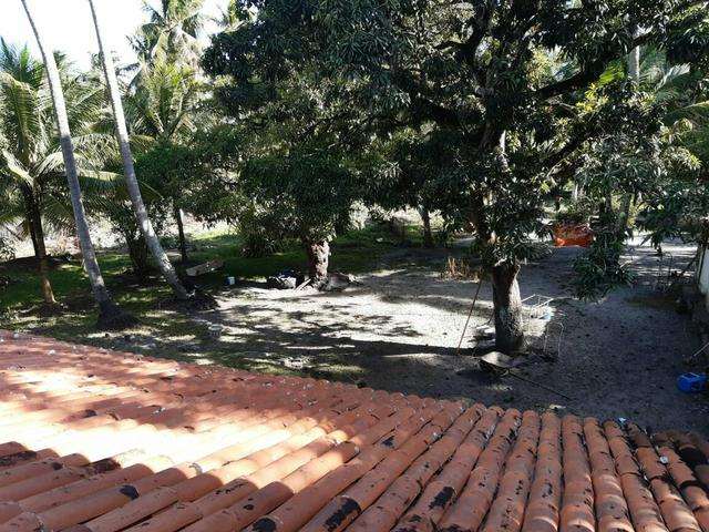 Ótimo sítio na Massagueira de Cima - 15.000 metros - Foto 4