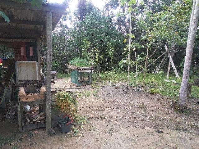 Vendo ou troco por casa em Manaus um sitio na AM010 KM 127. Mais 10KM ramal - Foto 8