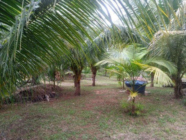 Vende-se sítio com casa, amplo espaço e inúmeras árvores frutíferas. - Foto 10