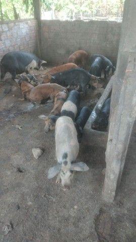 Porco regional aqui na cidade