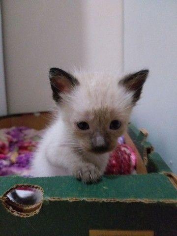 Gatinhos e gatinhas  - Foto 3