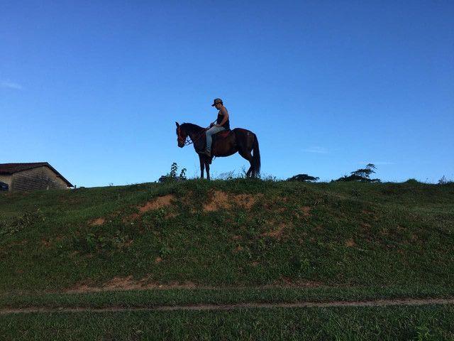 Égua mangalarga - Foto 4