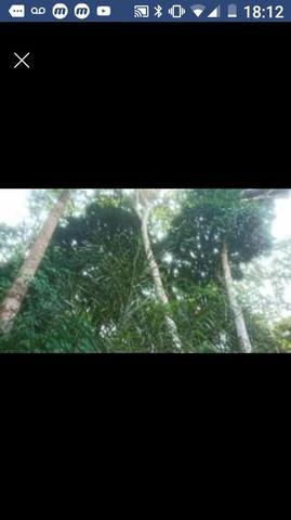 Vendo sitio Cotriguaçu