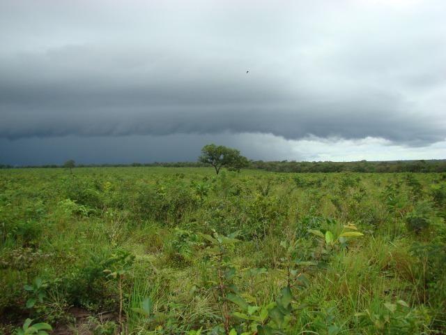 Fazenda com 1.006 hectares, com sede, aberta, para soja e milho - Foto 3