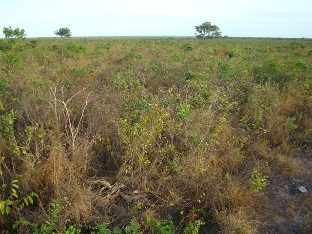 Fazenda com 1.006 hectares, com sede, aberta, para soja e milho - Foto 7