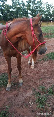 Cavalo - Foto 5