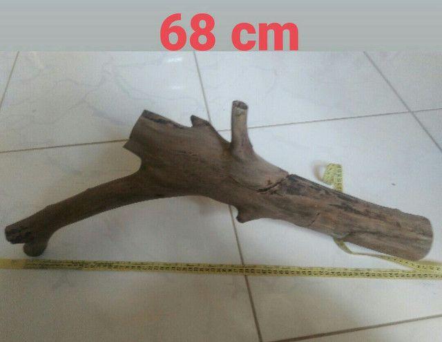 Vendo tronco de goiaba já tratado para aquário  - Foto 2