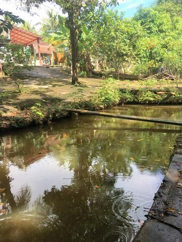 Chácara Urbana formada próximo ao Jardim Japonês - - Foto 11