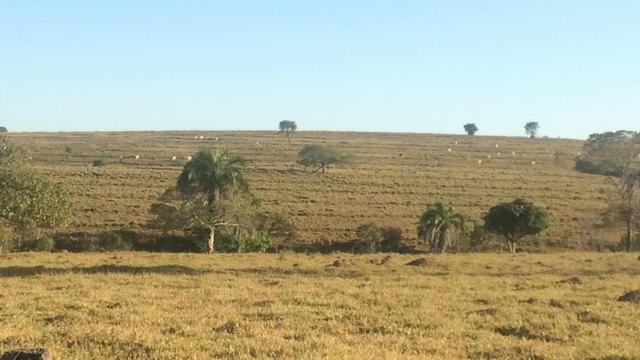 [ Cultura | Plana | Asfalto ] 66 Alq. Sanclerlândia. 130 km Goiânia. R$ 6,6 Milhões - Foto 4