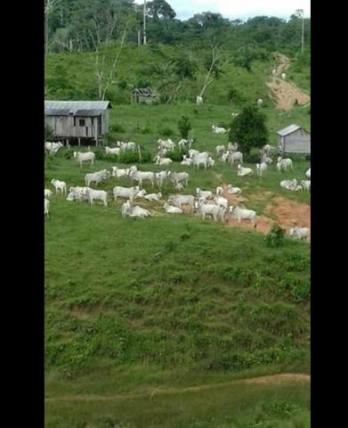 Vende-se fazenda e sítio PARCELADOS