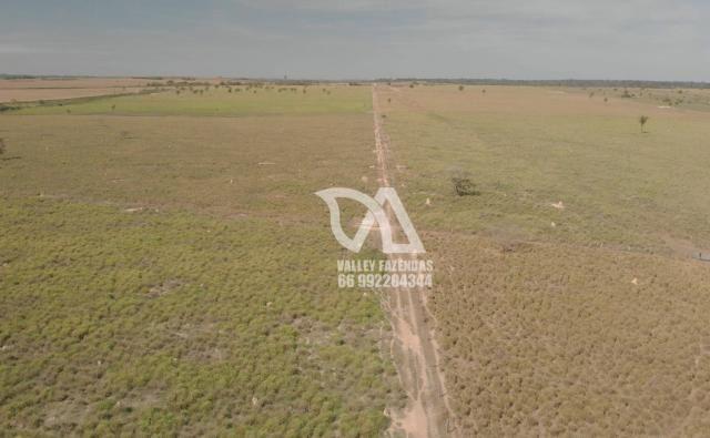Fazenda à venda, 1134 hectares por R$ 24.000.000,00 - Novo Mundo/MT - Foto 7