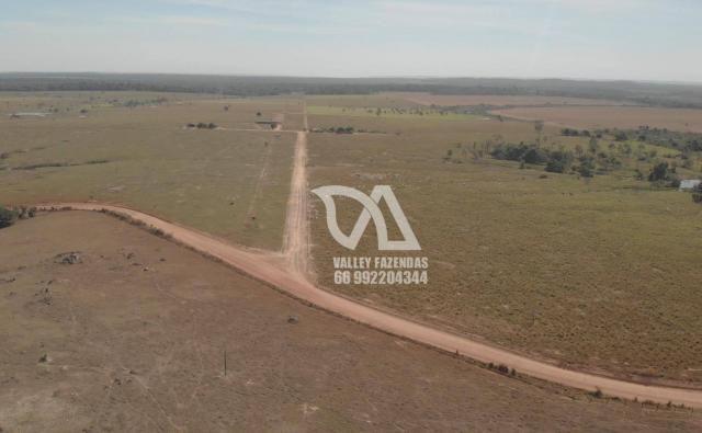 Fazenda à venda, 1134 hectares por R$ 24.000.000,00 - Novo Mundo/MT - Foto 2