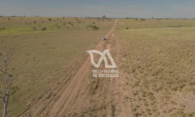 Fazenda à venda, 1134 hectares por R$ 24.000.000,00 - Novo Mundo/MT - Foto 16