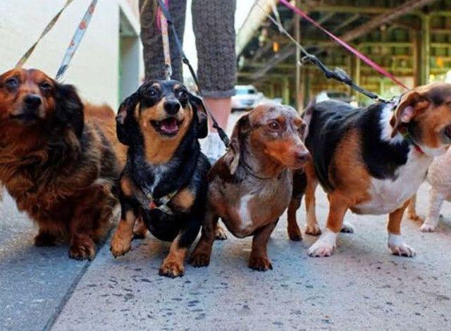 Dog walker/pet sitter - Foto 2