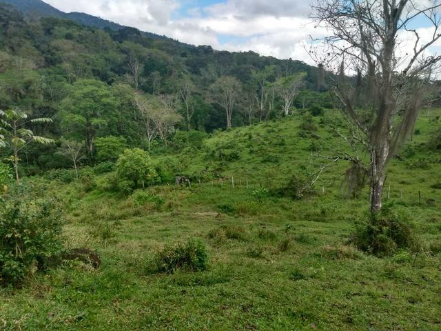 Fazenda Ibicaraí - Foto 4