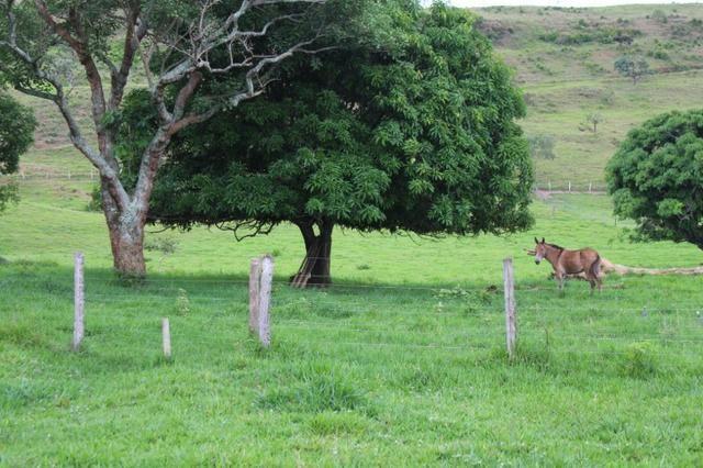 """Fazenda Montada 25 Alqueires Cocalzinho""""Toda Formada,72 km de Anapolis,129 km Goiania - Foto 14"""