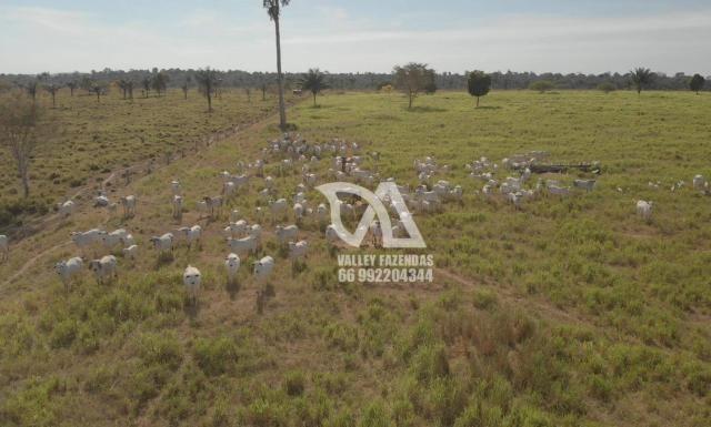Fazenda à venda, 1134 hectares por R$ 24.000.000,00 - Novo Mundo/MT - Foto 17