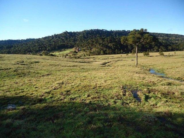 Lindo terreno na Serra Catarinense  - Foto 2