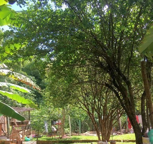 Chácara Urbana formada próximo ao Jardim Japonês - - Foto 7