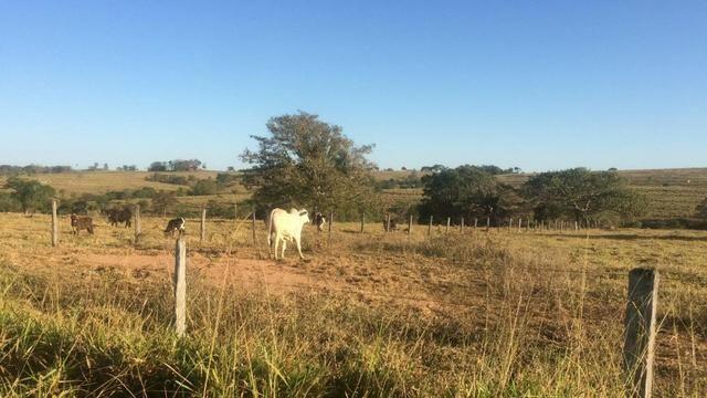[ Cultura | Plana | Asfalto ] 66 Alq. Sanclerlândia. 130 km Goiânia. R$ 6,6 Milhões - Foto 3