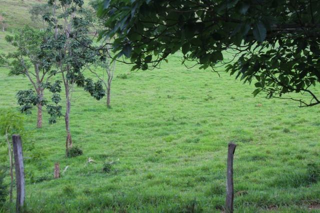 """Fazenda Montada 25 Alqueires Cocalzinho""""Toda Formada,72 km de Anapolis,129 km Goiania - Foto 15"""