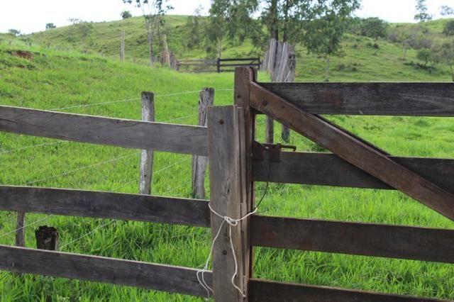 """Fazenda Montada 25 Alqueires Cocalzinho""""Toda Formada,72 km de Anapolis,129 km Goiania - Foto 6"""