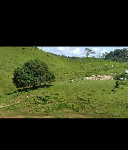 Vende-se fazenda e sítio PARCELADOS - Foto 6