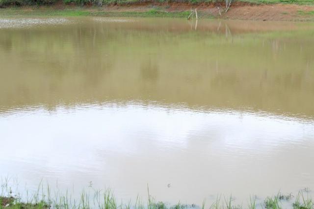 """Fazenda Montada 25 Alqueires Cocalzinho""""Toda Formada,72 km de Anapolis,129 km Goiania - Foto 4"""