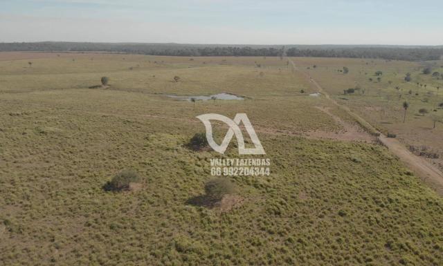 Fazenda à venda, 1134 hectares por R$ 24.000.000,00 - Novo Mundo/MT