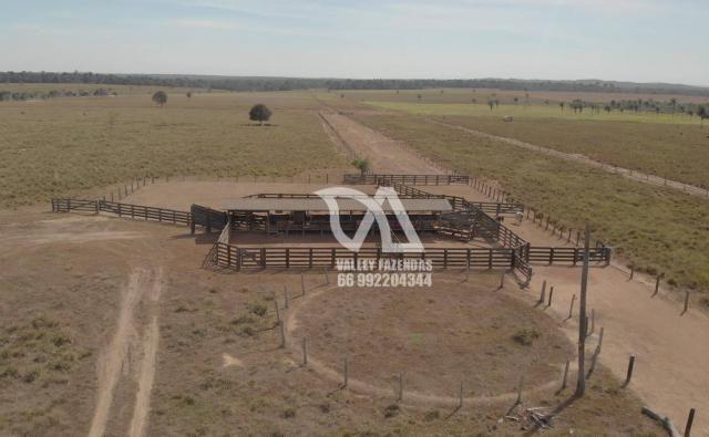 Fazenda à venda, 1134 hectares por R$ 24.000.000,00 - Novo Mundo/MT - Foto 4