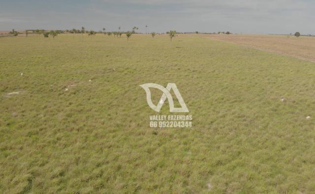 Fazenda à venda, 1134 hectares por R$ 24.000.000,00 - Novo Mundo/MT - Foto 8
