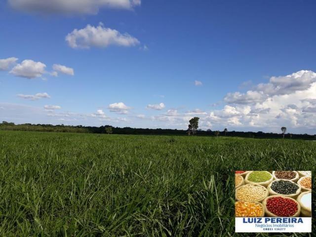 FAZENDA A VENDA DE 292 ALQUEIRÕES EM TALISMÃ - TO (Dupla Aptidão) - Foto 3