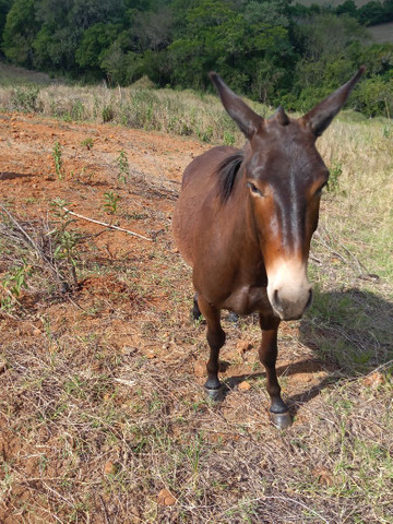 Vende-se Cavalos