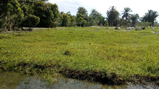 Fazenda 85 hec Vendo com Porteira Fechada - Foto 7