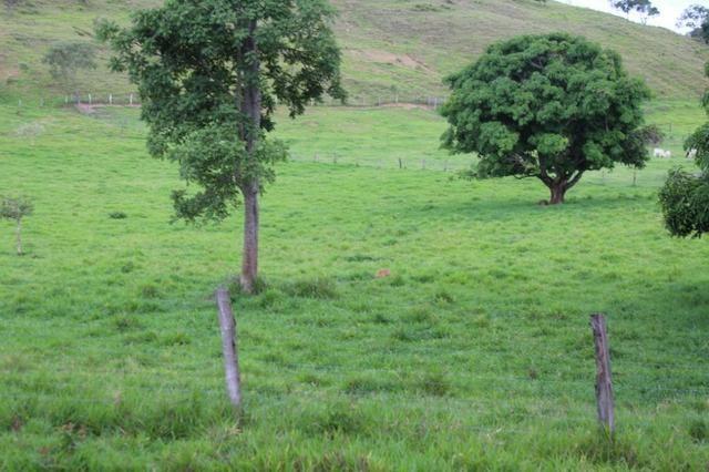 """Fazenda Montada 25 Alqueires Cocalzinho""""Toda Formada,72 km de Anapolis,129 km Goiania - Foto 13"""