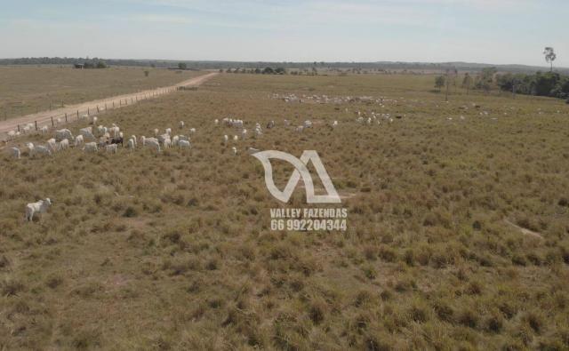 Fazenda à venda, 1134 hectares por R$ 24.000.000,00 - Novo Mundo/MT - Foto 6