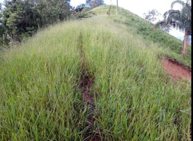 Vendo terreno de 4 alqueires em Ribeirão, Vargem Alta - Foto 11