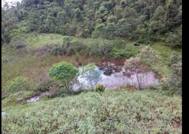 Vendo terreno de 4 alqueires em Ribeirão, Vargem Alta