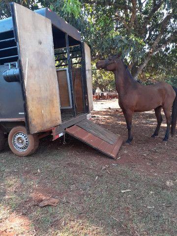 Frete para cavalos