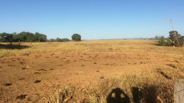 [ Cultura | Plana | Asfalto ] 66 Alq. Sanclerlândia. 130 km Goiânia. R$ 6,6 Milhões - Foto 5
