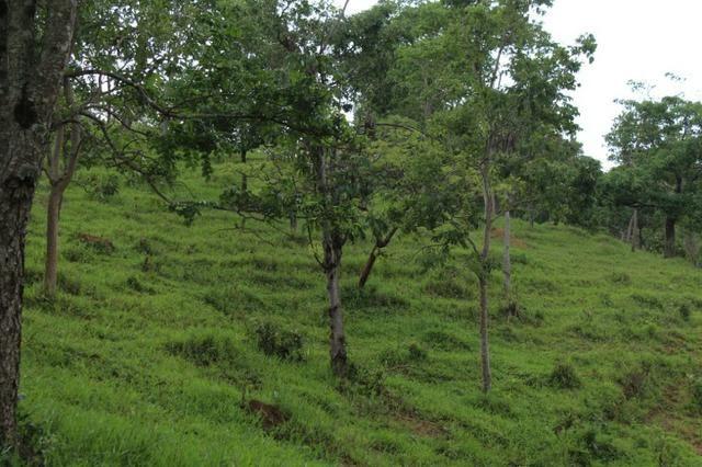 """Fazenda Montada 25 Alqueires Cocalzinho""""Toda Formada,72 km de Anapolis,129 km Goiania - Foto 16"""