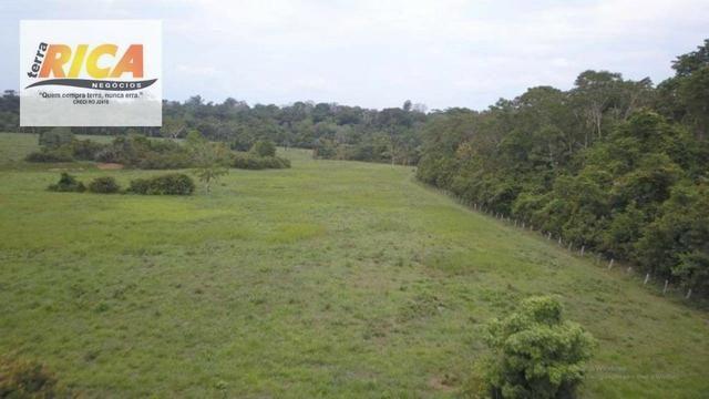 Fazenda com 320 hectares a venda na Zona Rural de Porto Velho/RO - Foto 4
