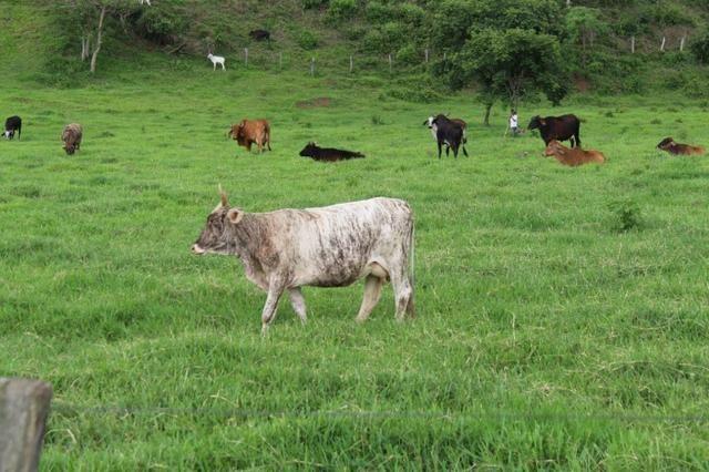 """Fazenda Montada 25 Alqueires Cocalzinho""""Toda Formada,72 km de Anapolis,129 km Goiania - Foto 18"""