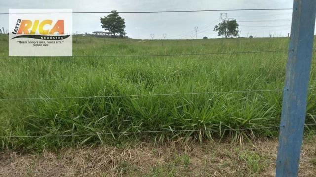 Fazenda com 320 hectares a venda na Zona Rural de Porto Velho/RO - Foto 6